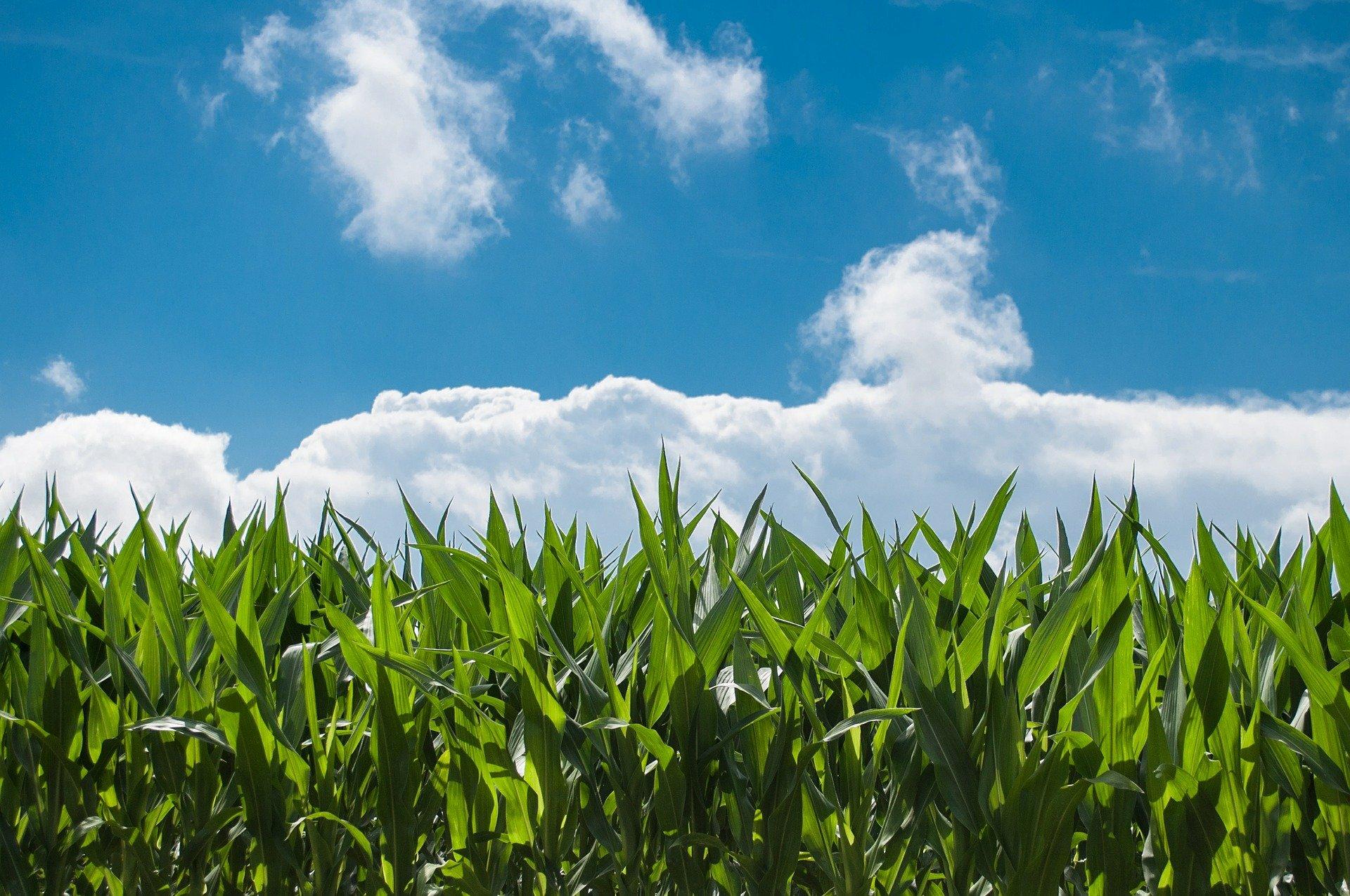 Webinaire. Qualité de l'air et agriculture : quels impacts ?